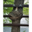funny picture of googly eyes on a tree that looks like it's eating a gate