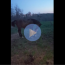 funny video of a horse kicking a stuffed toy horse