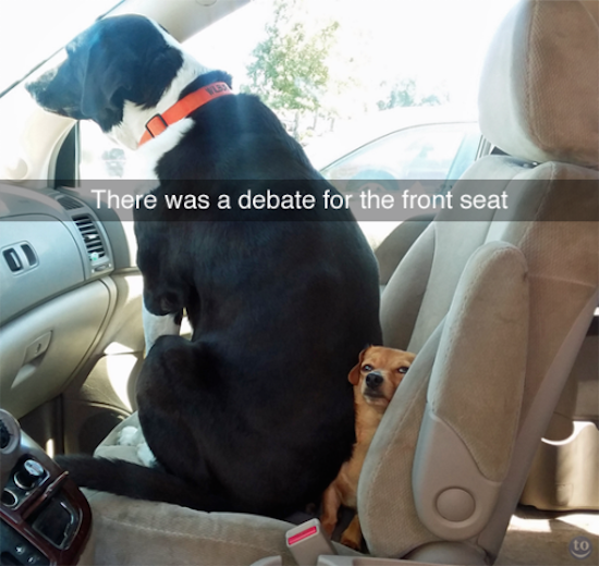 funny picture of dog sitting on smaller dog in front seat of car