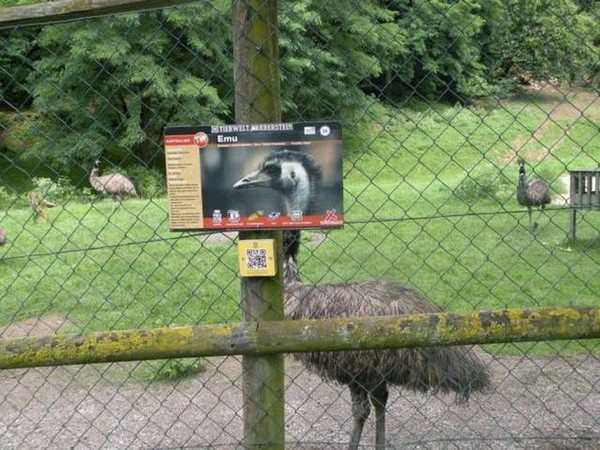 funny photo of emu standing perfectly behind sign of an emu