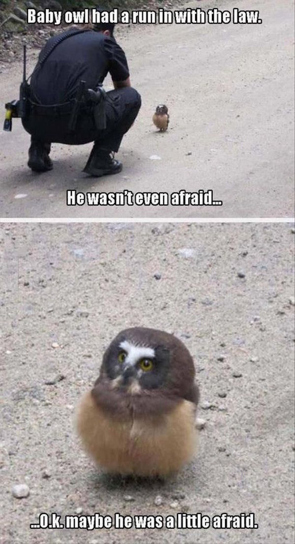funny photo of baby owl run in with the law