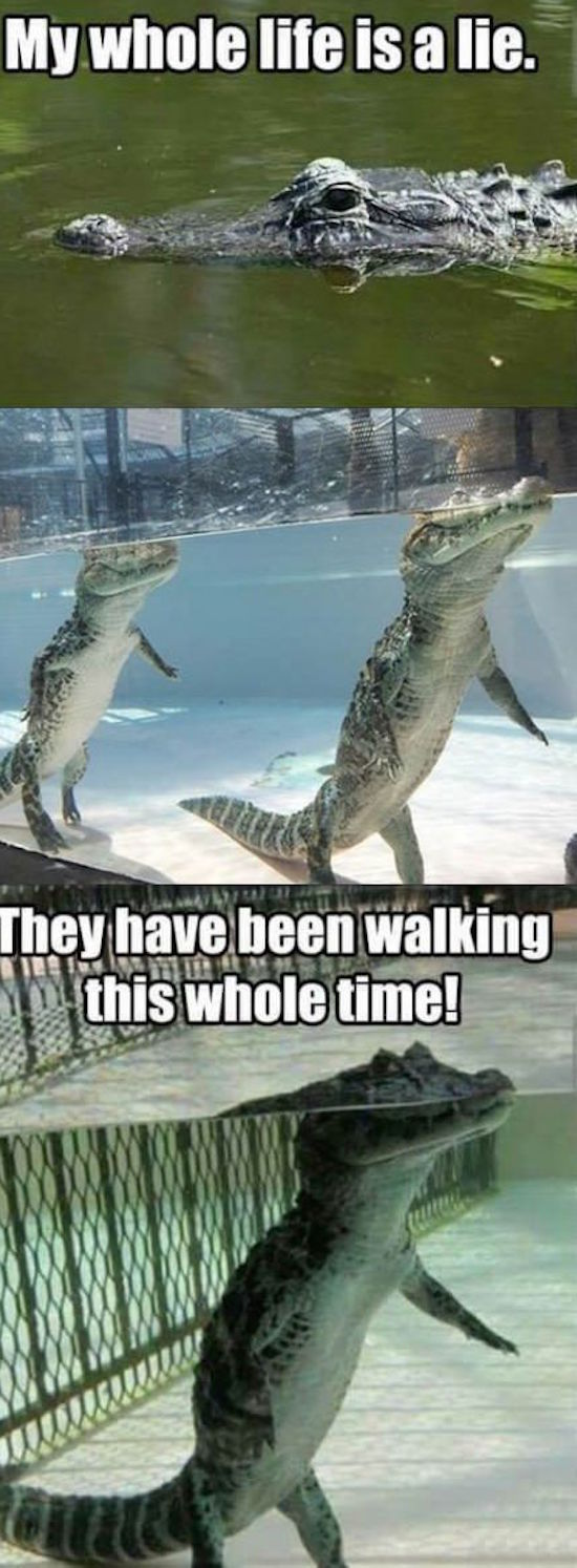 funny photo of crocodiles walking on two legs in water