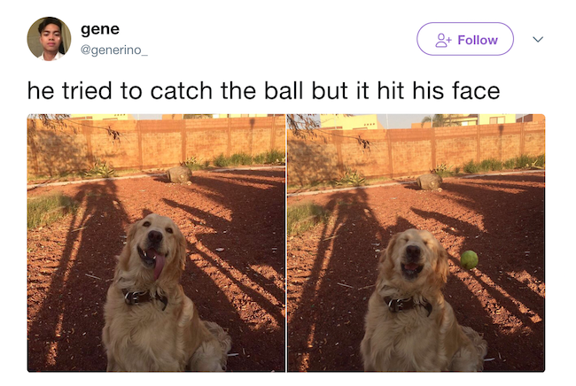 funny photo of dog tried to catch ball but it hit his face tweet
