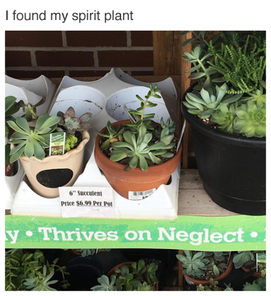 funny pic of my spirit plant thrives on neglect