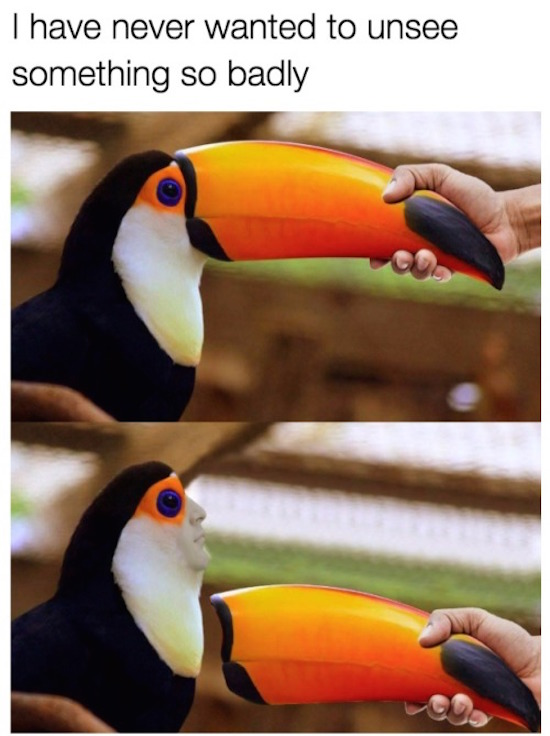 funny pic of toucan without a beak and a human face