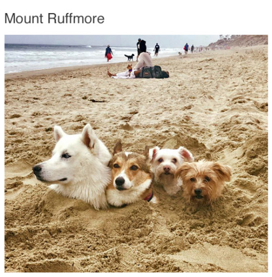 silly picture of mount ruff more dogs with their heads popping out of the sand