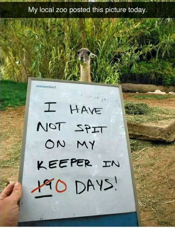 hilarious picture of sign that says not spit on my keeper llama