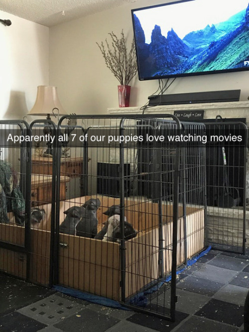 silly pic of puppies watching television