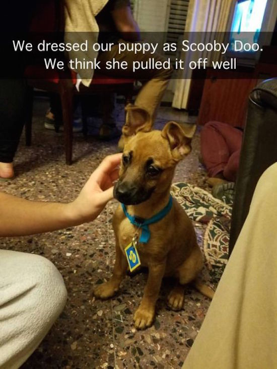 hilarious picture of puppy dressed as scooby doo