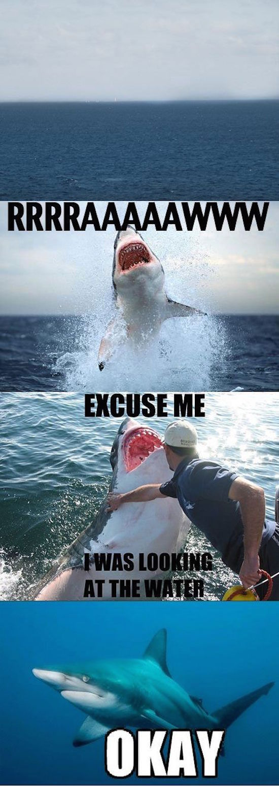 silly pic of shark jumping out of water and guy saying i was looking at the water meme