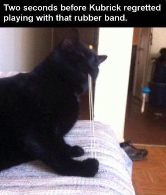 best funny picture of cat playing with rubber band