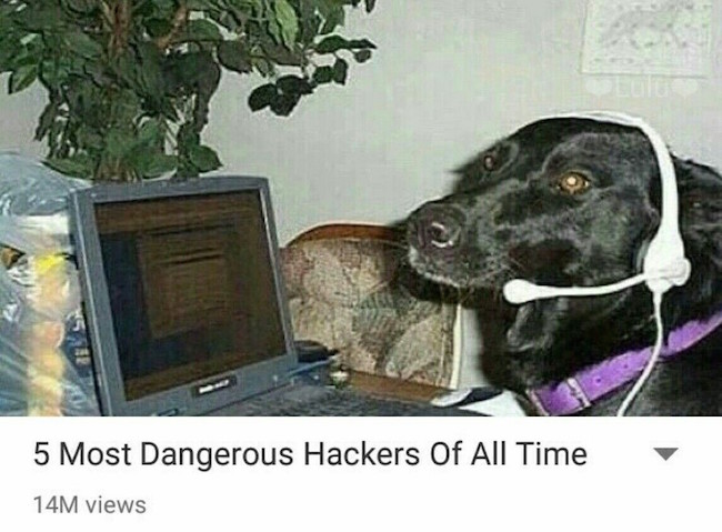 funny photo of dog with computer headseat is the most dangerous hacker