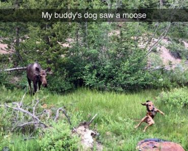 funny photo of perfectly timed photo of dog being scared by moose