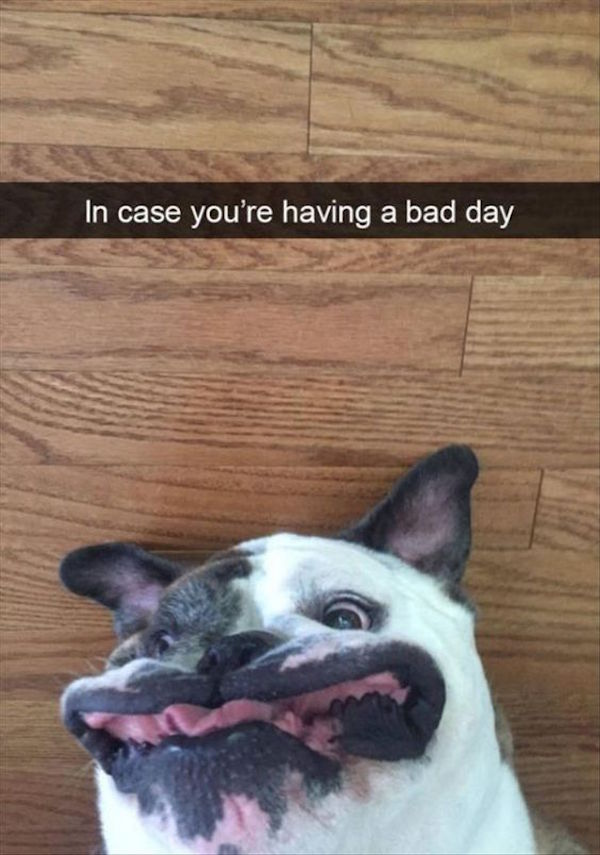 funny pic of funny dog face in case you're having a bad day