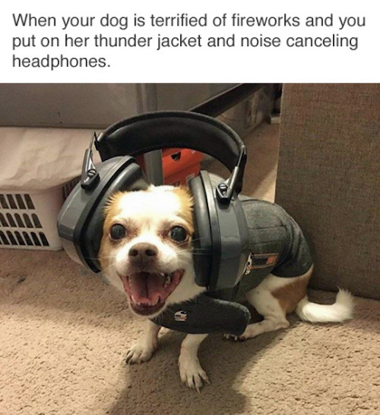 funny picture of dog wearing noise cancelling headphones and thunder jacket during fireworks