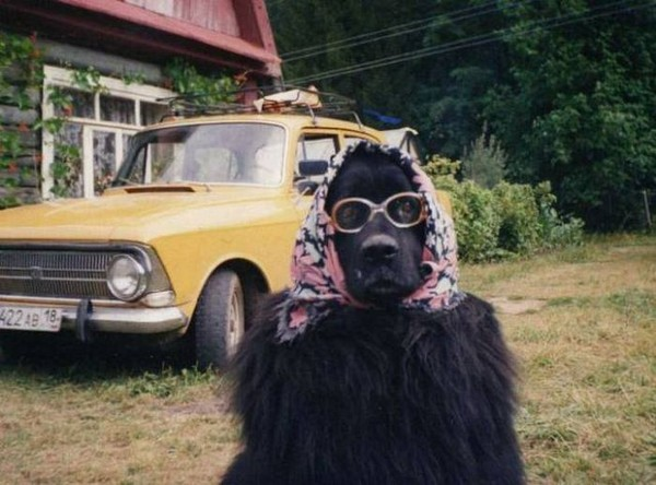 dog in babushka, best funny pictures, funny pics, funny photos, funny pictures, funny vids, the best funny pictures, really funny photos, funny photos of animals, funny photos 2016, funny photos 2017, funny photos 2018, funny photos 2019, funny pics 2016, funny pics 2017, funny pics 2018, funny pics 2019, funny pictures 2016, funny pictures 2017, funny pictures 2018, funny pictures 2019, funniest pics 2016, funniest pics 2017, funniest pics 2018, funniest pics 2019, funniest pictures 2016, funniest pictures 2017, funniest pictures 2018, funniest pictures 2019, funniest photos 2016, funniest photos 2017, funniest photos 2018, funniest photos 2019, where to find funny pictures, funny pictures which made everyone laugh, where funny pictures, where to download funny pictures, where to find funny pictures with captions, where to get funny pictures for instagram, where to find funny pictures to share, where to find funny pictures to share on facebook, where to see funny pictures, funny pictures for instagram, funny pictures for facebook, funny pictures for memes, funny pictures for wallpaper, funny pictures for him, funny pictures for her, funny pictures for friends, funny pictures for snapchat, funny pictures like uberhumor, funny pictures like 9gag, funny pictures like facebook, funny pictures like, funny pictures like ifunny, funny stuff like pictures, funny pictures to text, funny pictures to photoshop, funny pictures to send, funny pictures to caption, funny pictures to post, funny pictures to make someone feel better, funny pictures to put on facebook, funny pictures to make you laugh, funny pictures to make you smile, funny pictures to brighten your day, funny pictures to brighten someone's day, funny pictures with words, funny pictures with no words, funny pictures without captions, funny pictures with jokes, funny pictures with dogs, funny pictures with cats, funny pictures without words, funny pictures without text, where can I find funny photos, best photos ever, best photo ever,
