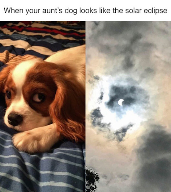 dog looks like solar eclipse, best funny pictures, funny pics, funny photos, funny pictures, funny vids, the best funny pictures, really funny photos, funny photos of animals, funny photos 2016, funny photos 2017, funny photos 2018, funny photos 2019, funny pics 2016, funny pics 2017, funny pics 2018, funny pics 2019, funny pictures 2016, funny pictures 2017, funny pictures 2018, funny pictures 2019, funniest pics 2016, funniest pics 2017, funniest pics 2018, funniest pics 2019, funniest pictures 2016, funniest pictures 2017, funniest pictures 2018, funniest pictures 2019, funniest photos 2016, funniest photos 2017, funniest photos 2018, funniest photos 2019, where to find funny pictures, funny pictures which made everyone laugh, where funny pictures, where to download funny pictures, where to find funny pictures with captions, where to get funny pictures for instagram, where to find funny pictures to share, where to find funny pictures to share on facebook, where to see funny pictures, funny pictures for instagram, funny pictures for facebook, funny pictures for memes, funny pictures for wallpaper, funny pictures for him, funny pictures for her, funny pictures for friends, funny pictures for snapchat, funny pictures like uberhumor, funny pictures like 9gag, funny pictures like facebook, funny pictures like, funny pictures like ifunny, funny stuff like pictures, funny pictures to text, funny pictures to photoshop, funny pictures to send, funny pictures to caption, funny pictures to post, funny pictures to make someone feel better, funny pictures to put on facebook, funny pictures to make you laugh, funny pictures to make you smile, funny pictures to brighten your day, funny pictures to brighten someone's day, funny pictures with words, funny pictures with no words, funny pictures without captions, funny pictures with jokes, funny pictures with dogs, funny pictures with cats, funny pictures without words, funny pictures without text, where can I find funny photos, best photos ever, best photo ever,