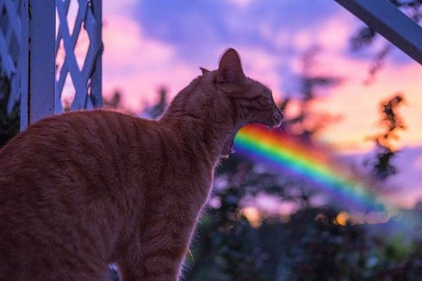perfectly timed cat yawn rainbow, best funny pictures, funny pics, funny photos, funny pictures, funny vids, the best funny pictures, really funny photos, funny photos of animals, funny photos 2016, funny photos 2017, funny photos 2018, funny photos 2019, funny pics 2016, funny pics 2017, funny pics 2018, funny pics 2019, funny pictures 2016, funny pictures 2017, funny pictures 2018, funny pictures 2019, funniest pics 2016, funniest pics 2017, funniest pics 2018, funniest pics 2019, funniest pictures 2016, funniest pictures 2017, funniest pictures 2018, funniest pictures 2019, funniest photos 2016, funniest photos 2017, funniest photos 2018, funniest photos 2019, where to find funny pictures, funny pictures which made everyone laugh, where funny pictures, where to download funny pictures, where to find funny pictures with captions, where to get funny pictures for instagram, where to find funny pictures to share, where to find funny pictures to share on facebook, where to see funny pictures, funny pictures for instagram, funny pictures for facebook, funny pictures for memes, funny pictures for wallpaper, funny pictures for him, funny pictures for her, funny pictures for friends, funny pictures for snapchat, funny pictures like uberhumor, funny pictures like 9gag, funny pictures like facebook, funny pictures like, funny pictures like ifunny, funny stuff like pictures, funny pictures to text, funny pictures to photoshop, funny pictures to send, funny pictures to caption, funny pictures to post, funny pictures to make someone feel better, funny pictures to put on facebook, funny pictures to make you laugh, funny pictures to make you smile, funny pictures to brighten your day, funny pictures to brighten someone's day, funny pictures with words, funny pictures with no words, funny pictures without captions, funny pictures with jokes, funny pictures with dogs, funny pictures with cats, funny pictures without words, funny pictures without text, where can I find funny photos, best photos ever, best photo ever,