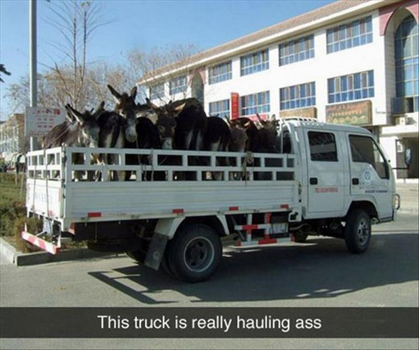 truck is really hauling ass, truck with donkeys, best funny pictures, funny pics, funny photos, funny pictures, funny vids, the best funny pictures, really funny photos, funny photos of animals, funny photos 2016, funny photos 2017, funny photos 2018, funny photos 2019, funny pics 2016, funny pics 2017, funny pics 2018, funny pics 2019, funny pictures 2016, funny pictures 2017, funny pictures 2018, funny pictures 2019, funniest pics 2016, funniest pics 2017, funniest pics 2018, funniest pics 2019, funniest pictures 2016, funniest pictures 2017, funniest pictures 2018, funniest pictures 2019, funniest photos 2016, funniest photos 2017, funniest photos 2018, funniest photos 2019, where to find funny pictures, funny pictures which made everyone laugh, where funny pictures, where to download funny pictures, where to find funny pictures with captions, where to get funny pictures for instagram, where to find funny pictures to share, where to find funny pictures to share on facebook, where to see funny pictures, funny pictures for instagram, funny pictures for facebook, funny pictures for memes, funny pictures for wallpaper, funny pictures for him, funny pictures for her, funny pictures for friends, funny pictures for snapchat, funny pictures like uberhumor, funny pictures like 9gag, funny pictures like facebook, funny pictures like, funny pictures like ifunny, funny stuff like pictures, funny pictures to text, funny pictures to photoshop, funny pictures to send, funny pictures to caption, funny pictures to post, funny pictures to make someone feel better, funny pictures to put on facebook, funny pictures to make you laugh, funny pictures to make you smile, funny pictures to brighten your day, funny pictures to brighten someone's day, funny pictures with words, funny pictures with no words, funny pictures without captions, funny pictures with jokes, funny pictures with dogs, funny pictures with cats, funny pictures without words, funny pictures without text, where can I find funny photos, best photos ever, best photo ever,