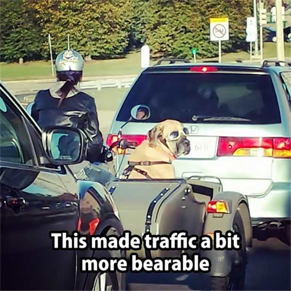 best photo ever of dog in goggles in traffic