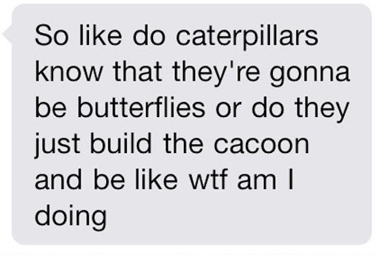 funny pic of text about caterpillars becoming butterflies