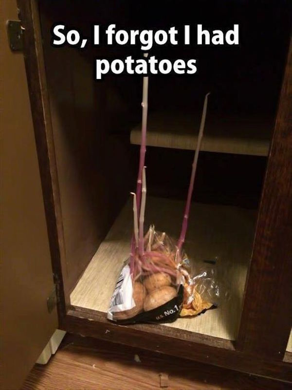 funny picture of forgot i had potatoes overgrown
