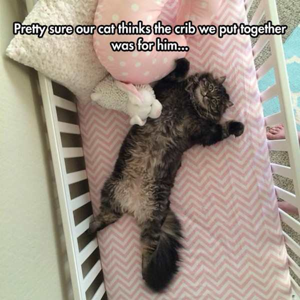 crib for cat, best funny pictures, funny pics, funny photos, funny pictures, funny vids, the best funny pictures, really funny photos, funny photos of animals, funny photos 2016, funny photos 2017, funny photos 2018, funny photos 2019, funny pics 2016, funny pics 2017, funny pics 2018, funny pics 2019, funny pictures 2016, funny pictures 2017, funny pictures 2018, funny pictures 2019, funniest pics 2016, funniest pics 2017, funniest pics 2018, funniest pics 2019, funniest pictures 2016, funniest pictures 2017, funniest pictures 2018, funniest pictures 2019, funniest photos 2016, funniest photos 2017, funniest photos 2018, funniest photos 2019, where to find funny pictures, funny pictures which made everyone laugh, where funny pictures, where to download funny pictures, where to find funny pictures with captions, where to get funny pictures for instagram, where to find funny pictures to share, where to find funny pictures to share on facebook, where to see funny pictures, funny pictures for instagram, funny pictures for facebook, funny pictures for memes, funny pictures for wallpaper, funny pictures for him, funny pictures for her, funny pictures for friends, funny pictures for snapchat, funny pictures like uberhumor, funny pictures like 9gag, funny pictures like facebook, funny pictures like, funny pictures like ifunny, funny stuff like pictures, funny pictures to text, funny pictures to photoshop, funny pictures to send, funny pictures to caption, funny pictures to post, funny pictures to make someone feel better, funny pictures to put on facebook, funny pictures to make you laugh, funny pictures to make you smile, funny pictures to brighten your day, funny pictures to brighten someone's day, funny pictures with words, funny pictures with no words, funny pictures without captions, funny pictures with jokes, funny pictures with dogs, funny pictures with cats, funny pictures without words, funny pictures without text, where can I find funny photos,