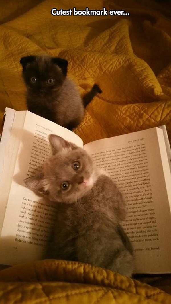 kitten as a bookmark, cutest bookmark ever, best funny pictures, funny pics, funny photos, funny pictures, funny vids, the best funny pictures, really funny photos, funny photos of animals, funny photos 2016, funny photos 2017, funny photos 2018, funny photos 2019, funny pics 2016, funny pics 2017, funny pics 2018, funny pics 2019, funny pictures 2016, funny pictures 2017, funny pictures 2018, funny pictures 2019, funniest pics 2016, funniest pics 2017, funniest pics 2018, funniest pics 2019, funniest pictures 2016, funniest pictures 2017, funniest pictures 2018, funniest pictures 2019, funniest photos 2016, funniest photos 2017, funniest photos 2018, funniest photos 2019, where to find funny pictures, funny pictures which made everyone laugh, where funny pictures, where to download funny pictures, where to find funny pictures with captions, where to get funny pictures for instagram, where to find funny pictures to share, where to find funny pictures to share on facebook, where to see funny pictures, funny pictures for instagram, funny pictures for facebook, funny pictures for memes, funny pictures for wallpaper, funny pictures for him, funny pictures for her, funny pictures for friends, funny pictures for snapchat, funny pictures like uberhumor, funny pictures like 9gag, funny pictures like facebook, funny pictures like, funny pictures like ifunny, funny stuff like pictures, funny pictures to text, funny pictures to photoshop, funny pictures to send, funny pictures to caption, funny pictures to post, funny pictures to make someone feel better, funny pictures to put on facebook, funny pictures to make you laugh, funny pictures to make you smile, funny pictures to brighten your day, funny pictures to brighten someone's day, funny pictures with words, funny pictures with no words, funny pictures without captions, funny pictures with jokes, funny pictures with dogs, funny pictures with cats, funny pictures without words, funny pictures without text, where can I find funny photos,