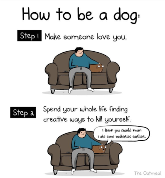 how to be a dog comic by the oatmeal, best funny pictures, funny pics, funny photos, funny pictures, funny vids, the best funny pictures, really funny photos, funny photos of animals, funny photos 2016, funny photos 2017, funny photos 2018, funny photos 2019, funny pics 2016, funny pics 2017, funny pics 2018, funny pics 2019, funny pictures 2016, funny pictures 2017, funny pictures 2018, funny pictures 2019, funniest pics 2016, funniest pics 2017, funniest pics 2018, funniest pics 2019, funniest pictures 2016, funniest pictures 2017, funniest pictures 2018, funniest pictures 2019, funniest photos 2016, funniest photos 2017, funniest photos 2018, funniest photos 2019, where to find funny pictures, funny pictures which made everyone laugh, where funny pictures, where to download funny pictures, where to find funny pictures with captions, where to get funny pictures for instagram, where to find funny pictures to share, where to find funny pictures to share on facebook, where to see funny pictures, funny pictures for instagram, funny pictures for facebook, funny pictures for memes, funny pictures for wallpaper, funny pictures for him, funny pictures for her, funny pictures for friends, funny pictures for snapchat, funny pictures like uberhumor, funny pictures like 9gag, funny pictures like facebook, funny pictures like, funny pictures like ifunny, funny stuff like pictures, funny pictures to text, funny pictures to photoshop, funny pictures to send, funny pictures to caption, funny pictures to post, funny pictures to make someone feel better, funny pictures to put on facebook, funny pictures to make you laugh, funny pictures to make you smile, funny pictures to brighten your day, funny pictures to brighten someone's day, funny pictures with words, funny pictures with no words, funny pictures without captions, funny pictures with jokes, funny pictures with dogs, funny pictures with cats, funny pictures without words, funny pictures without text, where can I find funny photos,