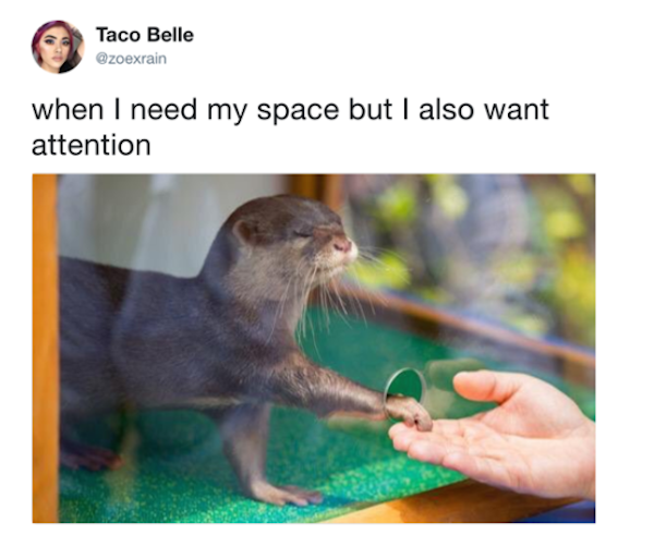 when I need space but also want attention otter, best funny pictures, funny pics, funny photos, funny pictures, funny vids, the best funny pictures, really funny photos, funny photos of animals, funny photos 2016, funny photos 2017, funny photos 2018, funny photos 2019, funny pics 2016, funny pics 2017, funny pics 2018, funny pics 2019, funny pictures 2016, funny pictures 2017, funny pictures 2018, funny pictures 2019, funniest pics 2016, funniest pics 2017, funniest pics 2018, funniest pics 2019, funniest pictures 2016, funniest pictures 2017, funniest pictures 2018, funniest pictures 2019, funniest photos 2016, funniest photos 2017, funniest photos 2018, funniest photos 2019, where to find funny pictures, funny pictures which made everyone laugh, where funny pictures, where to download funny pictures, where to find funny pictures with captions, where to get funny pictures for instagram, where to find funny pictures to share, where to find funny pictures to share on facebook, where to see funny pictures, funny pictures for instagram, funny pictures for facebook, funny pictures for memes, funny pictures for wallpaper, funny pictures for him, funny pictures for her, funny pictures for friends, funny pictures for snapchat, funny pictures like uberhumor, funny pictures like 9gag, funny pictures like facebook, funny pictures like, funny pictures like ifunny, funny stuff like pictures, funny pictures to text, funny pictures to photoshop, funny pictures to send, funny pictures to caption, funny pictures to post, funny pictures to make someone feel better, funny pictures to put on facebook, funny pictures to make you laugh, funny pictures to make you smile, funny pictures to brighten your day, funny pictures to brighten someone's day, funny pictures with words, funny pictures with no words, funny pictures without captions, funny pictures with jokes, funny pictures with dogs, funny pictures with cats, funny pictures without words, funny pictures without text, where can I fi