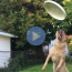 slow motion video of dog trying to catch frisbee and crashing into person taking video