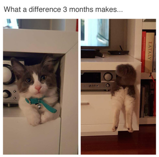 cat can't fit, best funny pictures, funny pics, funny photos, funny pictures, funny vids, the best funny pictures, really funny photos, funny photos of animals, funny photos 2016, funny photos 2017, funny photos 2018, funny photos 2019, funny pics 2016, funny pics 2017, funny pics 2018, funny pics 2019, funny pictures 2016, funny pictures 2017, funny pictures 2018, funny pictures 2019, funniest pics 2016, funniest pics 2017, funniest pics 2018, funniest pics 2019, funniest pictures 2016, funniest pictures 2017, funniest pictures 2018, funniest pictures 2019, funniest photos 2016, funniest photos 2017, funniest photos 2018, funniest photos 2019, where to find funny pictures, funny pictures which made everyone laugh, where funny pictures, where to download funny pictures, where to find funny pictures with captions, where to get funny pictures for instagram, where to find funny pictures to share, where to find funny pictures to share on facebook, where to see funny pictures, funny pictures for instagram, funny pictures for facebook, funny pictures for memes, funny pictures for wallpaper, funny pictures for him, funny pictures for her, funny pictures for friends, funny pictures for snapchat, funny pictures like uberhumor, funny pictures like 9gag, funny pictures like facebook, funny pictures like, funny pictures like ifunny, funny stuff like pictures, funny pictures to text, funny pictures to photoshop, funny pictures to send, funny pictures to caption, funny pictures to post, funny pictures to make someone feel better, funny pictures to put on facebook, funny pictures to make you laugh, funny pictures to make you smile, funny pictures to brighten your day, funny pictures to brighten someone's day, funny pictures with words, funny pictures with no words, funny pictures without captions, funny pictures with jokes, funny pictures with dogs, funny pictures with cats, funny pictures without words, funny pictures without text, where can I find funny photos, best photos ever, best photo ever,