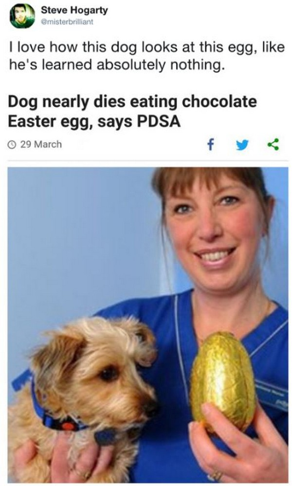 dog looking at chocolate easter egg learned nothing, best funny pictures, funny pics, funny photos, funny pictures, funny vids, the best funny pictures, really funny photos, funny photos of animals, funny photos 2016, funny photos 2017, funny photos 2018, funny photos 2019, funny pics 2016, funny pics 2017, funny pics 2018, funny pics 2019, funny pictures 2016, funny pictures 2017, funny pictures 2018, funny pictures 2019, funniest pics 2016, funniest pics 2017, funniest pics 2018, funniest pics 2019, funniest pictures 2016, funniest pictures 2017, funniest pictures 2018, funniest pictures 2019, funniest photos 2016, funniest photos 2017, funniest photos 2018, funniest photos 2019, where to find funny pictures, funny pictures which made everyone laugh, where funny pictures, where to download funny pictures, where to find funny pictures with captions, where to get funny pictures for instagram, where to find funny pictures to share, where to find funny pictures to share on facebook, where to see funny pictures, funny pictures for instagram, funny pictures for facebook, funny pictures for memes, funny pictures for wallpaper, funny pictures for him, funny pictures for her, funny pictures for friends, funny pictures for snapchat, funny pictures like uberhumor, funny pictures like 9gag, funny pictures like facebook, funny pictures like, funny pictures like ifunny, funny stuff like pictures, funny pictures to text, funny pictures to photoshop, funny pictures to send, funny pictures to caption, funny pictures to post, funny pictures to make someone feel better, funny pictures to put on facebook, funny pictures to make you laugh, funny pictures to make you smile, funny pictures to brighten your day, funny pictures to brighten someone's day, funny pictures with words, funny pictures with no words, funny pictures without captions, funny pictures with jokes, funny pictures with dogs, funny pictures with cats, funny pictures without words, funny pictures without text, where can I find funny photos, best photos ever, best photo ever,