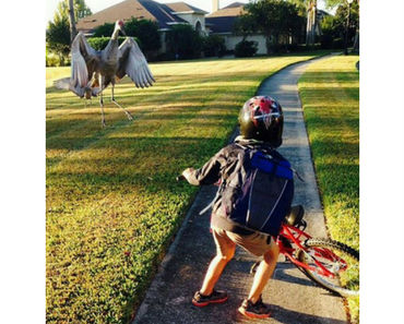 meanwhile in florida bird attack, best funny pictures, funny pics, funny photos, funny pictures, funny vids, the best funny pictures, really funny photos, funny photos of animals, funny photos 2016, funny photos 2017, funny photos 2018, funny photos 2019, funny pics 2016, funny pics 2017, funny pics 2018, funny pics 2019, funny pictures 2016, funny pictures 2017, funny pictures 2018, funny pictures 2019, funniest pics 2016, funniest pics 2017, funniest pics 2018, funniest pics 2019, funniest pictures 2016, funniest pictures 2017, funniest pictures 2018, funniest pictures 2019, funniest photos 2016, funniest photos 2017, funniest photos 2018, funniest photos 2019, where to find funny pictures, funny pictures which made everyone laugh, where funny pictures, where to download funny pictures, where to find funny pictures with captions, where to get funny pictures for instagram, where to find funny pictures to share, where to find funny pictures to share on facebook, where to see funny pictures, funny pictures for instagram, funny pictures for facebook, funny pictures for memes, funny pictures for wallpaper, funny pictures for him, funny pictures for her, funny pictures for friends, funny pictures for snapchat, funny pictures like uberhumor, funny pictures like 9gag, funny pictures like facebook, funny pictures like, funny pictures like ifunny, funny stuff like pictures, funny pictures to text, funny pictures to photoshop, funny pictures to send, funny pictures to caption, funny pictures to post, funny pictures to make someone feel better, funny pictures to put on facebook, funny pictures to make you laugh, funny pictures to make you smile, funny pictures to brighten your day, funny pictures to brighten someone's day, funny pictures with words, funny pictures with no words, funny pictures without captions, funny pictures with jokes, funny pictures with dogs, funny pictures with cats, funny pictures without words, funny pictures without text, where can I find funny photos