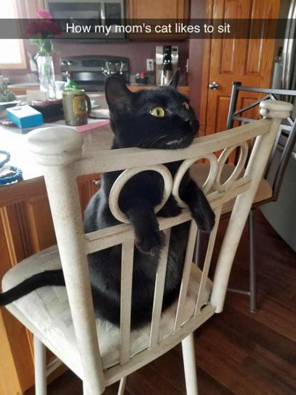 cat sitting funny, cats sitting funnybest funny pictures, funny pics, funny photos, funny pictures, funny vids, the best funny pictures, really funny photos, funny photos of animals, funny photos 2016, funny photos 2017, funny photos 2018, funny photos 2019, funny pics 2016, funny pics 2017, funny pics 2018, funny pics 2019, funny pictures 2016, funny pictures 2017, funny pictures 2018, funny pictures 2019, funniest pics 2016, funniest pics 2017, funniest pics 2018, funniest pics 2019, funniest pictures 2016, funniest pictures 2017, funniest pictures 2018, funniest pictures 2019, funniest photos 2016, funniest photos 2017, funniest photos 2018, funniest photos 2019, where to find funny pictures, funny pictures which made everyone laugh, where funny pictures, where to download funny pictures, where to find funny pictures with captions, where to get funny pictures for instagram, where to find funny pictures to share, where to find funny pictures to share on facebook, where to see funny pictures, funny pictures for instagram, funny pictures for facebook, funny pictures for memes, funny pictures for wallpaper, funny pictures for him, funny pictures for her, funny pictures for friends, funny pictures for snapchat, funny pictures like uberhumor, funny pictures like 9gag, funny pictures like facebook, funny pictures like, funny pictures like ifunny, funny stuff like pictures, funny pictures to text, funny pictures to photoshop, funny pictures to send, funny pictures to caption, funny pictures to post, funny pictures to make someone feel better, funny pictures to put on facebook, funny pictures to make you laugh, funny pictures to make you smile, funny pictures to brighten your day, funny pictures to brighten someone's day, funny pictures with words, funny pictures with no words, funny pictures without captions, funny pictures with jokes, funny pictures with dogs, funny pictures with cats, funny pictures without words, funny pictures without text, where can I find funny photos, best photos ever, best photo ever,
