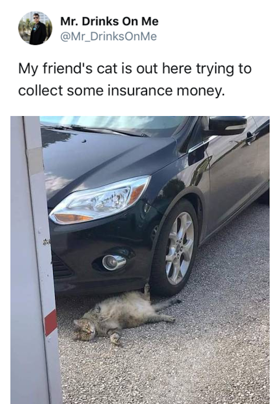 funny pic of cat trying to collect insurance money tweet