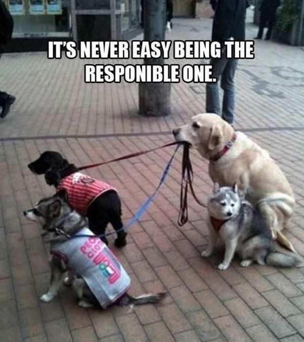 funny photo of dog holding other dog leashes