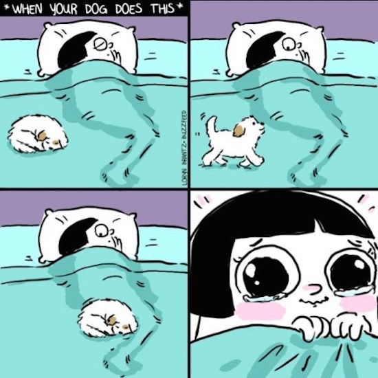 funny picture of when your dog does this comic by loren brantz