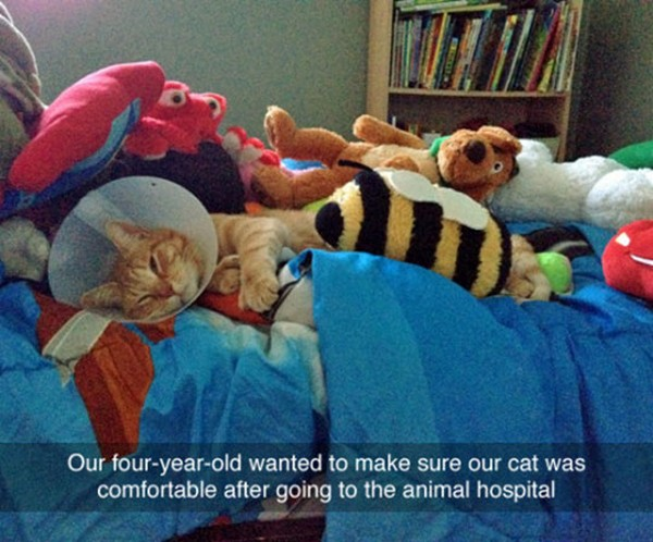 hilarious photo of cat covered in stuffed animals after hospital visit