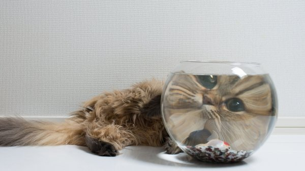 cat looking through fish bowl, best funny pictures, funny pics, funny photos, funny pictures, funny vids, the best funny pictures, really funny photos, funny photos of animals, funny photos 2016, funny photos 2017, funny photos 2018, funny photos 2019, funny pics 2016, funny pics 2017, funny pics 2018, funny pics 2019, funny pictures 2016, funny pictures 2017, funny pictures 2018, funny pictures 2019, funniest pics 2016, funniest pics 2017, funniest pics 2018, funniest pics 2019, funniest pictures 2016, funniest pictures 2017, funniest pictures 2018, funniest pictures 2019, funniest photos 2016, funniest photos 2017, funniest photos 2018, funniest photos 2019, where to find funny pictures, funny pictures which made everyone laugh, where funny pictures, where to download funny pictures, where to find funny pictures with captions, where to get funny pictures for instagram, where to find funny pictures to share, where to find funny pictures to share on facebook, where to see funny pictures, funny pictures for instagram, funny pictures for facebook, funny pictures for memes, funny pictures for wallpaper, funny pictures for him, funny pictures for her, funny pictures for friends, funny pictures for snapchat, funny pictures like uberhumor, funny pictures like 9gag, funny pictures like facebook, funny pictures like, funny pictures like ifunny, funny stuff like pictures, funny pictures to text, funny pictures to photoshop, funny pictures to send, funny pictures to caption, funny pictures to post, funny pictures to make someone feel better, funny pictures to put on facebook, funny pictures to make you laugh, funny pictures to make you smile, funny pictures to brighten your day, funny pictures to brighten someone's day, funny pictures with words, funny pictures with no words, funny pictures without captions, funny pictures with jokes, funny pictures with dogs, funny pictures with cats, funny pictures without words, funny pictures without text, where can I find funny photos, best photos ever, best photo ever,