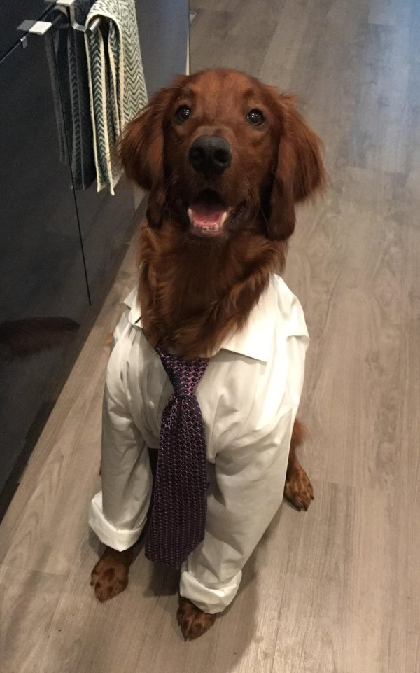 dog in shirt and tie, dog wearing shirt and tie, best funny pictures, funny pics, funny photos, funny pictures, funny vids, the best funny pictures, really funny photos, funny photos of animals, funny photos 2016, funny photos 2017, funny photos 2018, funny photos 2019, funny pics 2016, funny pics 2017, funny pics 2018, funny pics 2019, funny pictures 2016, funny pictures 2017, funny pictures 2018, funny pictures 2019, funniest pics 2016, funniest pics 2017, funniest pics 2018, funniest pics 2019, funniest pictures 2016, funniest pictures 2017, funniest pictures 2018, funniest pictures 2019, funniest photos 2016, funniest photos 2017, funniest photos 2018, funniest photos 2019, where to find funny pictures, funny pictures which made everyone laugh, where funny pictures, where to download funny pictures, where to find funny pictures with captions, where to get funny pictures for instagram, where to find funny pictures to share, where to find funny pictures to share on facebook, where to see funny pictures, funny pictures for instagram, funny pictures for facebook, funny pictures for memes, funny pictures for wallpaper, funny pictures for him, funny pictures for her, funny pictures for friends, funny pictures for snapchat, funny pictures like uberhumor, funny pictures like 9gag, funny pictures like facebook, funny pictures like, funny pictures like ifunny, funny stuff like pictures, funny pictures to text, funny pictures to photoshop, funny pictures to send, funny pictures to caption, funny pictures to post, funny pictures to make someone feel better, funny pictures to put on facebook, funny pictures to make you laugh, funny pictures to make you smile, funny pictures to brighten your day, funny pictures to brighten someone's day, funny pictures with words, funny pictures with no words, funny pictures without captions, funny pictures with jokes, funny pictures with dogs, funny pictures with cats, funny pictures without words, funny pictures without text, where can I find funny photos, best photos ever, best photo ever,