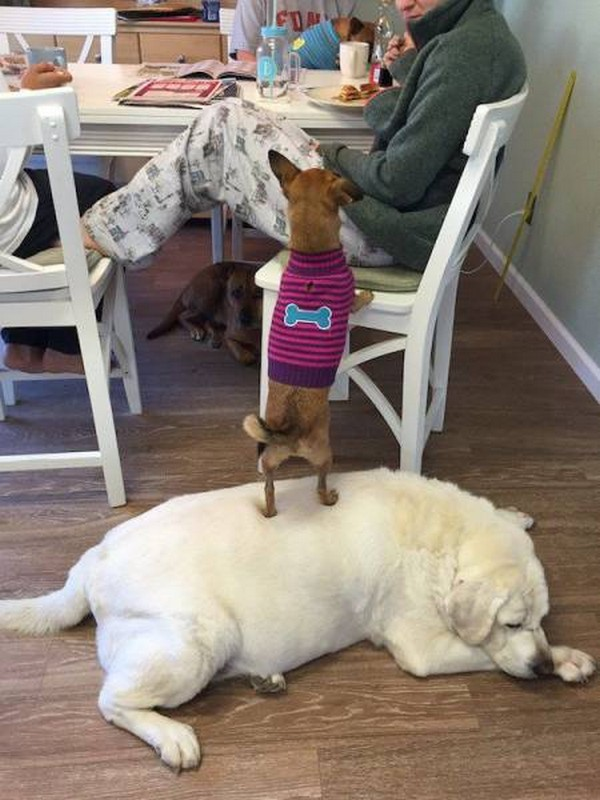 little dog standing on big dog, dog standing on other dog, best funny pictures, funny pics, funny photos, funny pictures, funny vids, the best funny pictures, really funny photos, funny photos of animals, funny photos 2016, funny photos 2017, funny photos 2018, funny photos 2019, funny pics 2016, funny pics 2017, funny pics 2018, funny pics 2019, funny pictures 2016, funny pictures 2017, funny pictures 2018, funny pictures 2019, funniest pics 2016, funniest pics 2017, funniest pics 2018, funniest pics 2019, funniest pictures 2016, funniest pictures 2017, funniest pictures 2018, funniest pictures 2019, funniest photos 2016, funniest photos 2017, funniest photos 2018, funniest photos 2019, where to find funny pictures, funny pictures which made everyone laugh, where funny pictures, where to download funny pictures, where to find funny pictures with captions, where to get funny pictures for instagram, where to find funny pictures to share, where to find funny pictures to share on facebook, where to see funny pictures, funny pictures for instagram, funny pictures for facebook, funny pictures for memes, funny pictures for wallpaper, funny pictures for him, funny pictures for her, funny pictures for friends, funny pictures for snapchat, funny pictures like uberhumor, funny pictures like 9gag, funny pictures like facebook, funny pictures like, funny pictures like ifunny, funny stuff like pictures, funny pictures to text, funny pictures to photoshop, funny pictures to send, funny pictures to caption, funny pictures to post, funny pictures to make someone feel better, funny pictures to put on facebook, funny pictures to make you laugh, funny pictures to make you smile, funny pictures to brighten your day, funny pictures to brighten someone's day, funny pictures with words, funny pictures with no words, funny pictures without captions, funny pictures with jokes, funny pictures with dogs, funny pictures with cats, funny pictures without words, funny pictures without text, where can I find funny photos, best photos ever, best photo ever,