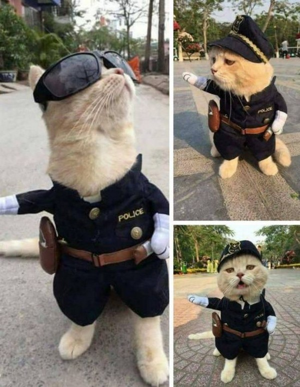 cat in police costume, officer cat, cat officer, cat police, police cat, best funny pictures, funny pics, funny photos, funny pictures, funny vids, the best funny pictures, really funny photos, funny photos of animals, funny photos 2016, funny photos 2017, funny photos 2018, funny photos 2019, funny pics 2016, funny pics 2017, funny pics 2018, funny pics 2019, funny pictures 2016, funny pictures 2017, funny pictures 2018, funny pictures 2019, funniest pics 2016, funniest pics 2017, funniest pics 2018, funniest pics 2019, funniest pictures 2016, funniest pictures 2017, funniest pictures 2018, funniest pictures 2019, funniest photos 2016, funniest photos 2017, funniest photos 2018, funniest photos 2019, where to find funny pictures, funny pictures which made everyone laugh, where funny pictures, where to download funny pictures, where to find funny pictures with captions, where to get funny pictures for instagram, where to find funny pictures to share, where to find funny pictures to share on facebook, where to see funny pictures, funny pictures for instagram, funny pictures for facebook, funny pictures for memes, funny pictures for wallpaper, funny pictures for him, funny pictures for her, funny pictures for friends, funny pictures for snapchat, funny pictures like uberhumor, funny pictures like 9gag, funny pictures like facebook, funny pictures like, funny pictures like ifunny, funny stuff like pictures, funny pictures to text, funny pictures to photoshop, funny pictures to send, funny pictures to caption, funny pictures to post, funny pictures to make someone feel better, funny pictures to put on facebook, funny pictures to make you laugh, funny pictures to make you smile, funny pictures to brighten your day, funny pictures to brighten someone's day, funny pictures with words, funny pictures with no words, funny pictures without captions, funny pictures with jokes, funny pictures with dogs, funny pictures with cats, funny pictures without words, funny pictures without text, where can I find funny photos, best photos ever, best photo ever,
