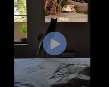 cat jumps into tv, cat jumps into television, cat jump fail, jumping cat fails, cat videos, cat fail, cat fails, cat falls, cat fall, cat jumps and falls, cat fall jump, cat knocks over papers, cat knocks over taxes, cat helps with taxes, taxes cat, cat taxes, cat fail videos, cat fail video, best cat fail videos, best cat fail videos 2016, best cat fail videos 2017, best cat fail videos 2018, best cat fail videos 2019, best cat fail videos 2020, funniest cat fail videos, funniest cat fail videos 2016, funniest cat fail videos 2017, funniest cat fail videos 2018, funniest cat fail videos 2019, funniest cat fail videos 2020, funny cat, funny cats, funny cat video, funny cat videos, cats funny, funny cats, funny video, funny videos, funny vid, funny vids, funniest video ever, animal video, animal videos, funny animal, funny animals, funniest cat videos 2016, funniest cat videos 2017, funniest cat videos 2018, funniest cat videos 2019, funniest cat videos 2020, funniest cats 2016, funniest cats 2017, funniest cats 2018, funniest cats 2019, funniest cats 2020, funniest kitten videos 2016, funniest kitten videos 2017, funniest kitten videos 2018, funniest kitten videos 2019, funniest kitten videos 2020