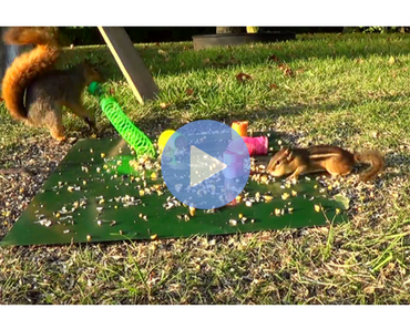 squirrel hits chipmunk with slinky, squirrel slinky, slinky fail