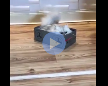 cat in a box, cat being dragged around in box, asshole cat, asshole cats, cats being asshole, cats are assholes, funny cat, funny cats, cat knocking things over, cat knocking things off table, funny cat video, funny cat videos, cats funny, funny cats, funny video, funny videos, funny vid, funny vids, funniest video ever, animal video, animal videos, funny animal, funny animals