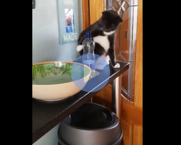 cat knocks bottle off shelf repeatedly, cat knocking bottle off shelf, cat caught in the act, asshole cat, asshole cats, cats being asshole, cats are assholes, funny cat, funny cats, cat knocking things over, cat knocking things off table, funny cat video, funny cat videos, cats funny, funny cats, funny video, funny videos, funny vid, funny vids, funniest video ever, animal video, animal videos, funny animal, funny animals