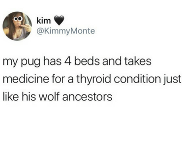 pug thyroid, wolf, funniest tweets, funny tweets, best tweets, top tweets, tweets, tweet, top tweet, best tweet, funny tweet, funniest tweet, hilarious tweets, very funny tweets