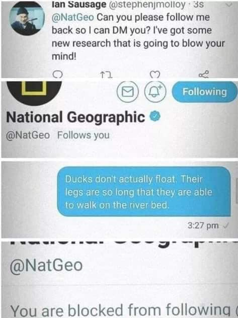 national geographic troll, ducks don't float tweet, ducks don't actually float tweet, @stephenjmolloy funny picture