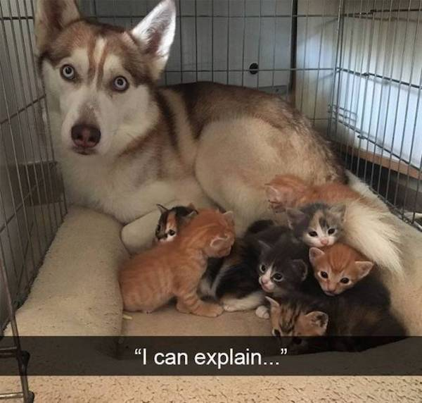 best funny pictures, funny pics, funny photos, funny pictures, funny vids, the best funny pictures, really funny photos, funny photos of animals, funny photos 2016, funny photos 2017, funny photos 2018, funny photos 2019, funny pics 2016, funny pics 2017, funny pics 2018, funny pics 2019, funny pictures 2016, funny pictures 2017, funny pictures 2018, funny pictures 2019, funniest pics 2016, funniest pics 2017, funniest pics 2018, funniest pics 2019, funniest pictures 2016, funniest pictures 2017, funniest pictures 2018, funniest pictures 2019, funniest photos 2016, funniest photos 2017, funniest photos 2018, funniest photos 2019, where to find funny pictures, funny pictures which made everyone laugh, where funny pictures, where to download funny pictures, where to find funny pictures with captions, where to get funny pictures for instagram, where to find funny pictures to share, where to find funny pictures to share on facebook, where to see funny pictures, funny pictures for instagram, funny pictures for facebook, funny pictures for memes, funny pictures for wallpaper, funny pictures for him, funny pictures for her, funny pictures for friends, funny pictures for snapchat, funny pictures like uberhumor, funny pictures like 9gag, funny pictures like facebook, funny pictures like, funny pictures like ifunny, funny stuff like pictures, funny pictures to text, funny pictures to photoshop, funny pictures to send, funny pictures to caption, funny pictures to post, funny pictures to make someone feel better, funny pictures to put on facebook, funny pictures to make you laugh, funny pictures to make you smile, funny pictures to brighten your day, funny pictures to brighten someone's day, funny pictures with words, funny pictures with no words, funny pictures without captions, funny pictures with jokes, funny pictures with dogs, funny pictures with cats, funny pictures without words, funny pictures without text, where can I find funny photos, best photos ever, best photo ever, silly photos, silly pictures, silly pics,